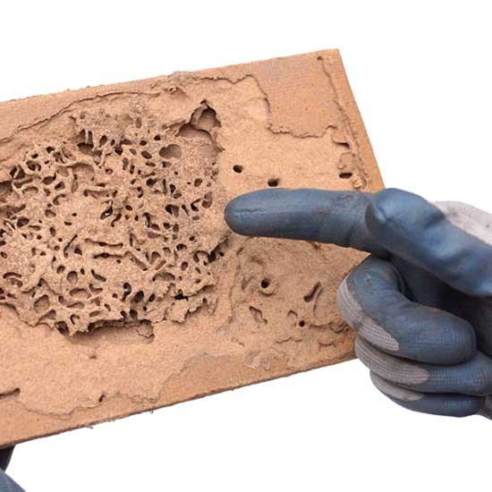 Identify termite damage in Knoxville TN - Russell's Pest Control